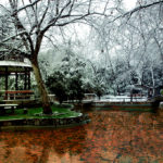 WHUT Qingnian Garden