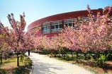 Shandong University Campus Qilu Software College Path to Restaurant