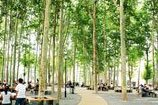 Shandong University Central Campus New View of the Grove