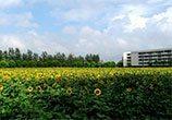 Zhejiang Gongshang University Summer